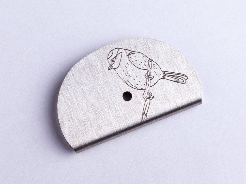 Sifflet gravé passereau mésange bleue