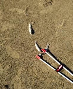 Muges sur la plage