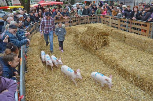 tiercé des petits cochons - cochondrome